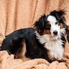 Doggies-0218