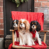 Doggies-0266