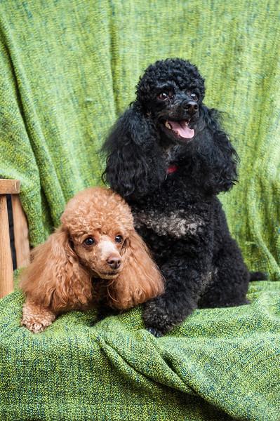 Doggies-0453