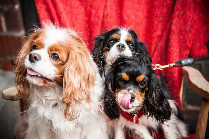 Doggies-0305