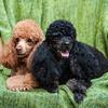Doggies-0478