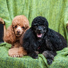 Doggies-0480
