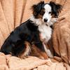 Doggies-0226