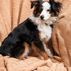 Doggies-0227