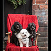 Doggies-9907_B