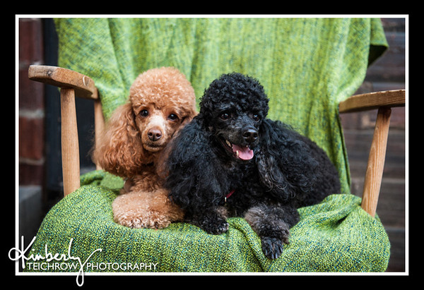Doggies-0482_B
