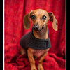Doggies-0210_B