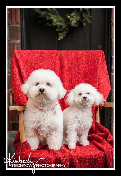 Doggies-9979_B