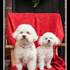 Doggies-9979_B