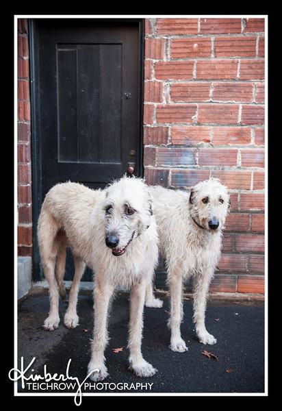 Doggies-0525_B