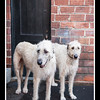 Doggies-0525_B