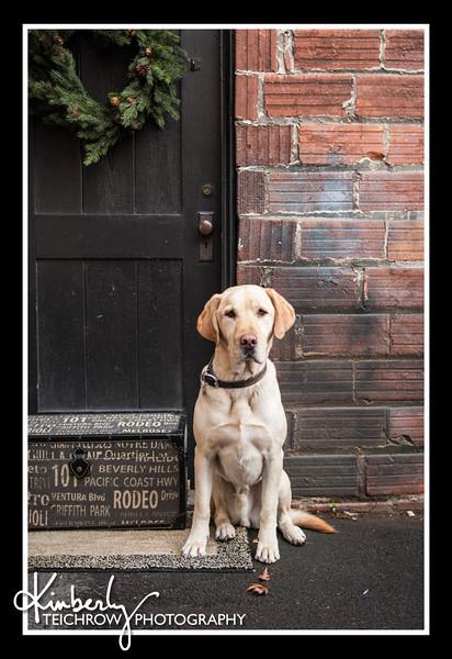 Doggies-9920_B