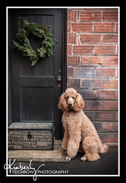 Doggies-0137_B