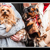 Doggies-0312_B