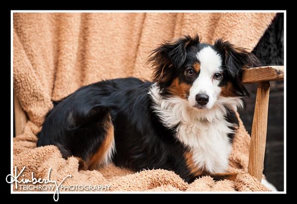Doggies-0216_B