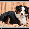 Doggies-0216_B