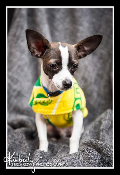 Doggies-9871_B