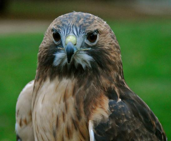 Predator Prowl, Nov 3, 2012