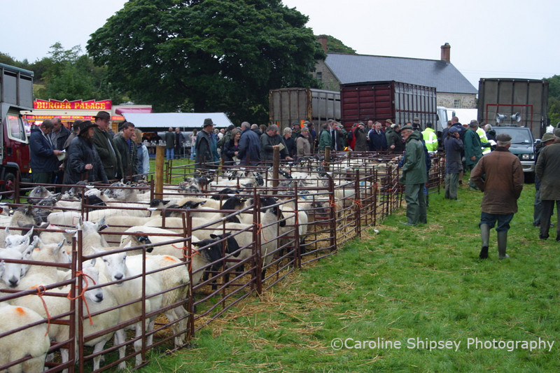 """Priddy Fair 2005"""