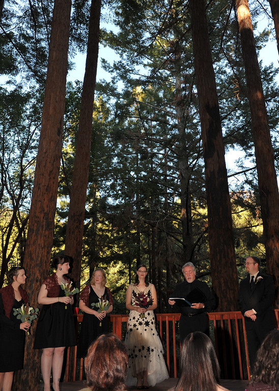 2520 - The amphitheater is within a beautiful redwood grove