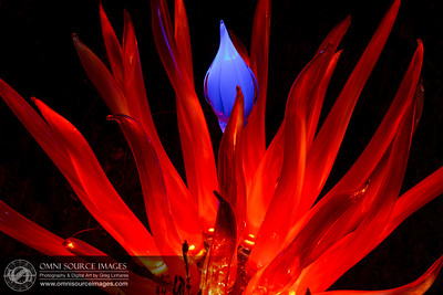 Autumn Lights Festival - The Gardens at Lake Merritt. Oakland, CA. Artist: Kim Webster www.kwebsterglass.com