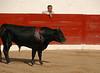 Puerto Vallarta Bullfight