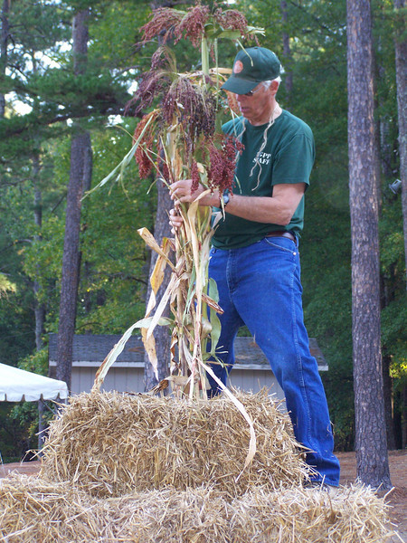 Bruce attaching the broom corn to the pole.