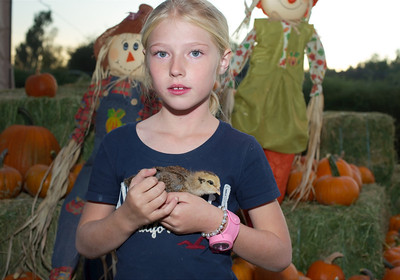 Pumpkin Pick and Potluck Dinner at Quail Hollow Farm CSA Moapa Valley community supported agriculture offering the freshest grown produce grown locally to serve the community. For a weekly basket of organic vegetables, fruits, herbs, cheese, flowers delivered to your home Contact Laura and Monte Bledsoe at 702-397-2021 Email quailhollowfarm@mvdsl.com Visit Quail Hollow Farm website www.quailhollowfarmcsa.com Photographs in this public online gallery free downloads for Quail Hollow Farm by Mark Bowers of ReallyVegasPhoto.com