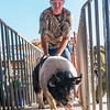Scott Tilton guides a hog through the gates to the pens after he was weighed in on Monday morning at the Putnam County Fair. While heifers, cow/calf pairs, poultry and rabbits were brought in on Saturday, 25 steers and 140 hogs were brought to the fair on Monday. Fran Ruchalski/Palatka Daily News
