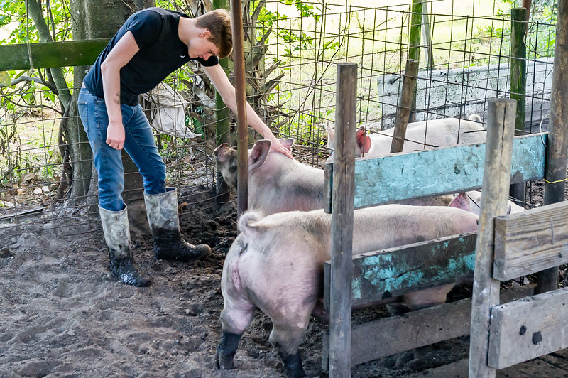 Morgan Chastain, 17, spends a little time with his hog, Bubba, so the swine will be more comfortable with him in the show ring next week. Fran Ruchalski/Palatka Daily News
