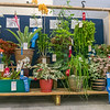 Some of the winning entries in the ornamental plant class on display at the Putnam County Fair. Fran Ruchalski/Palatka Daily News