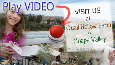 Quail Hollow Farms CSA information video. Quail Hollow Farms is your local provider for organic vegetables, fruits, herbs, cheese, flowers delivered to your home Contact Laura and Monty Bledsoe at 702-397-2021 Email quailhollowfarm@mvdsl.com Visit Quail Hollow Farm website http://www.quailhollowfarmcsa.com Video and editing by Kiki Kalor