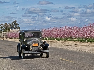 Cruising along the Blossom Trail in style
