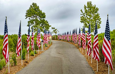 """""""Trail"""" in Castaways park lined by American Flags"""