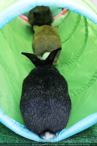 buns in the tunnel