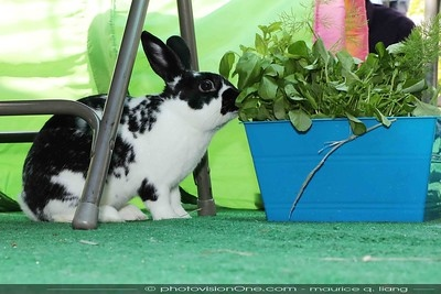 bunnies eating the edible plants