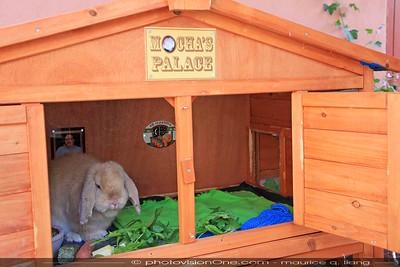 Mocha Gets a New Home - Mocha's Palace