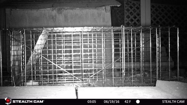 Raccoon Hunt 2016