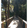 Boardwalk through the cypress trees. Liberty Park. Inverness