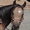 Joan's horse