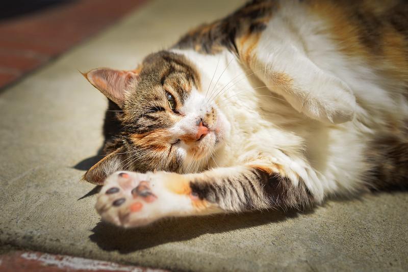 Nueve cat green yellow eyes-7