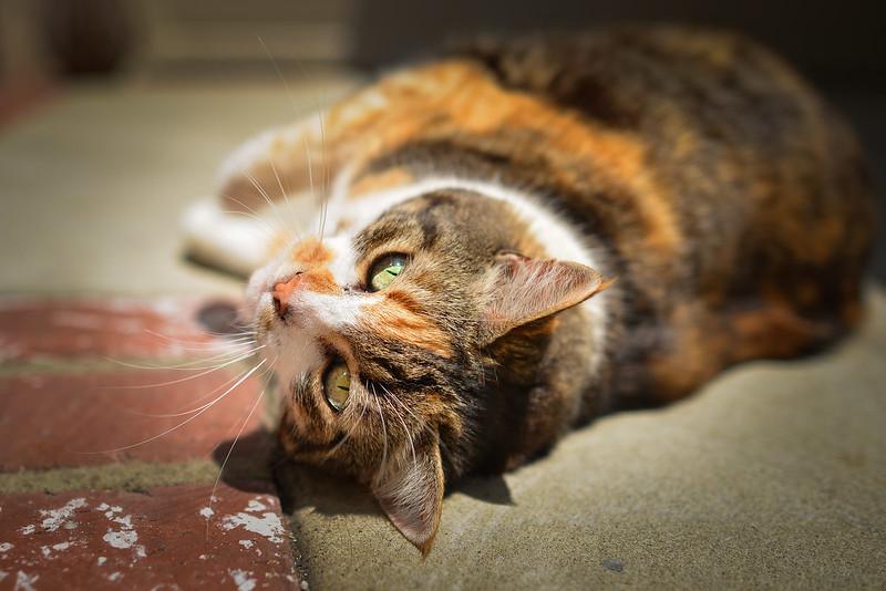 Nueve cat green yellow eyes-9
