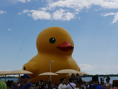 The Giant Duck