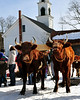 A very vocal steer, makes himself heard, as The Remick Country Doctor Museum and Farm, in Tamworth, NH, hosted an Ice Harvesting and Winter Carnival event, on Saturday, February 13, 2010.