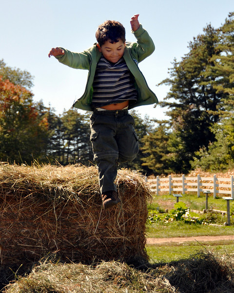 Logan Alward of Tamworth, NH, leaps into a big pile of hay, during The Remick Country Doctor Museum & Farm's Harvest Festival, held on September 26th, in Tamworth.