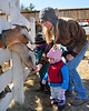 Louise Myrback, of Tamworth,  and her child Winter, feed a snack to the goats,  during the annual maple sugaring event, which was held at The Remick Country Doctor Museum and Farm, in Tamworth, NH, on March 27th, 2010.