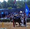 Knight contest