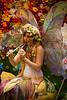 BWP92928_Renaissance_2014