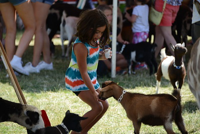 Ribfest 2017 - Naperville, Illinois - Petting Zoo