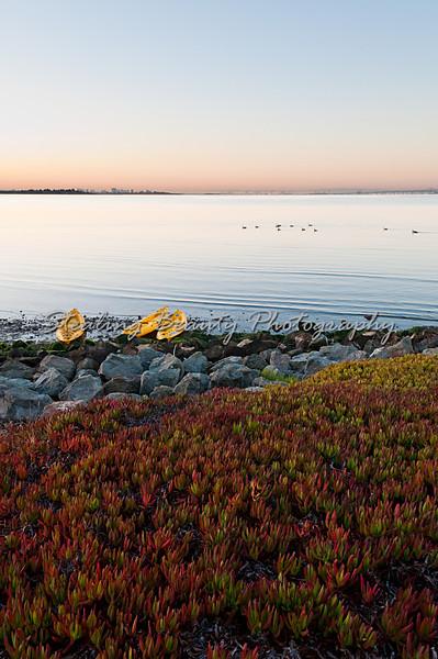 Dawn kayaks